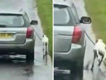 propriétaire fait courir chien à côté voiture recherché par police écossaise