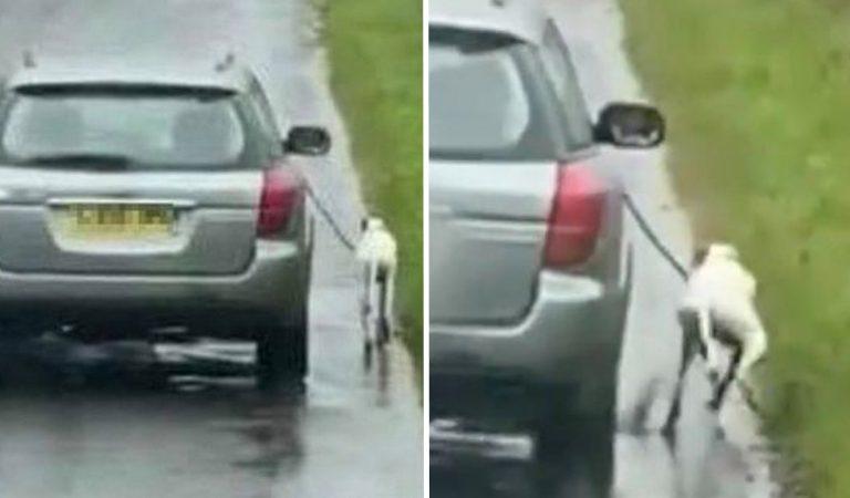 Honteux : la police recherche la personne cruelle qui a fait courir son chien à côté de sa voiture