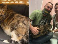 chat surpoids abandonné Philadelphie recueilli adoption
