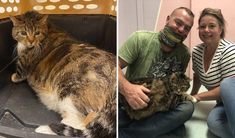 Lasagne, le chat Moggy de 13,5 kg abandonné a trouvé une nouvelle famille (photos)