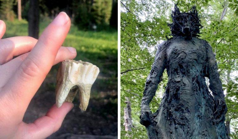 19 découvertes étonnantes faites lors d'une balade en forêt