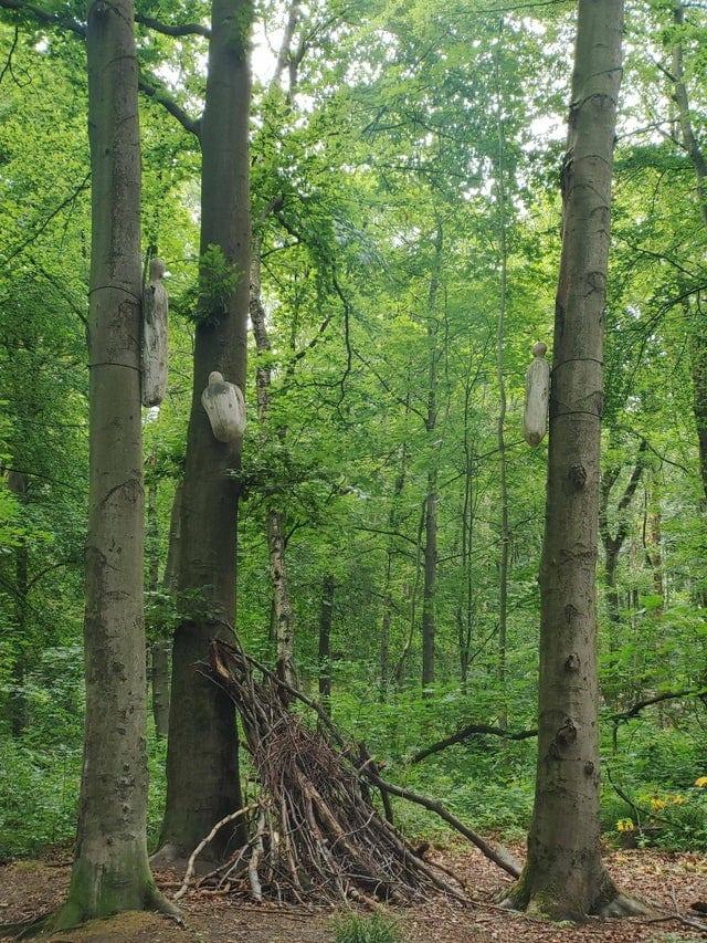 promenades forêts découvertes étonnantes