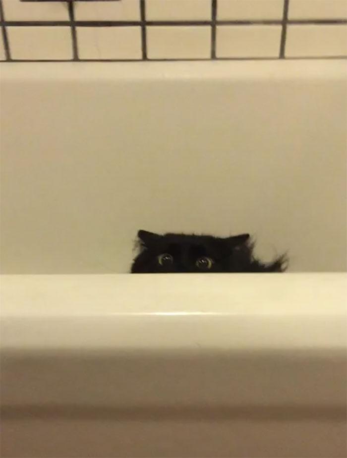 chats intrusion vie privée maîtres