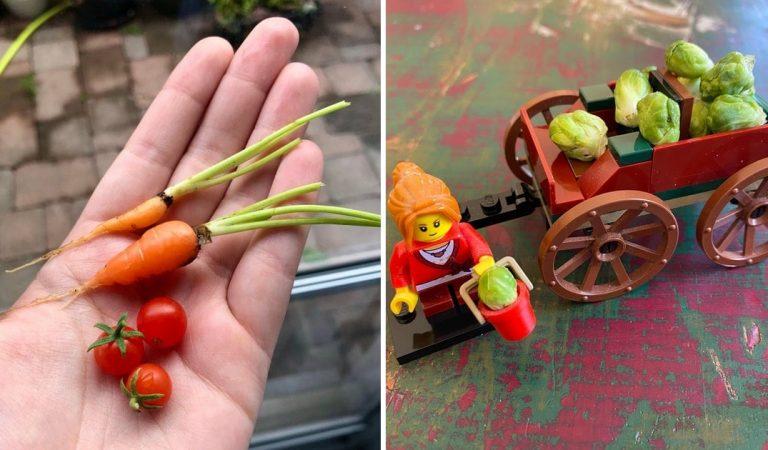 20 récoltes auxquelles les jardiniers amateurs ne s'attendaient pas