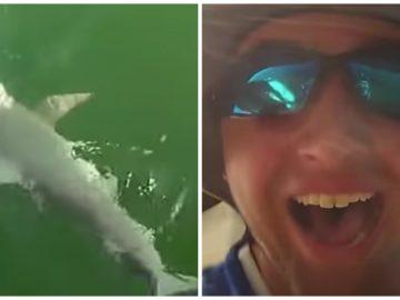 Un mérou géant mange un requin.