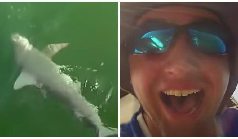 Vidéo : un mérou géant avale un requin sous les yeux stupéfaits des pêcheurs !