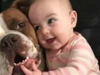 Un bébé avec son chien
