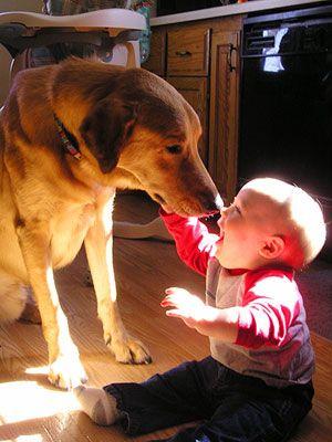 Un chien fait un bisou à un bébé