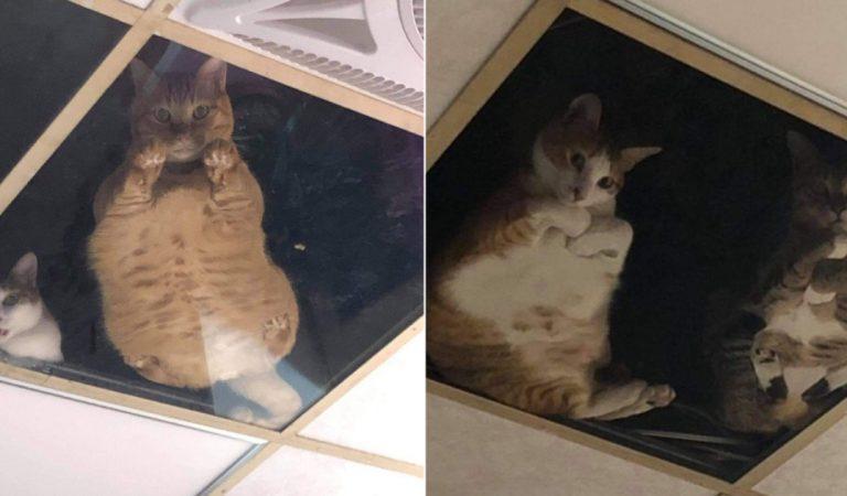 Taïwan : Un commerçant installe un plafond de verre pour que ses chats puissent le voir travailler