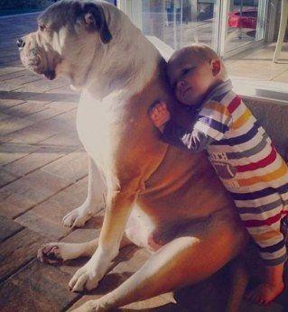 Un bébé fait un câlin à un chien