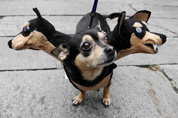 Un déguisement de chien à trois têtes
