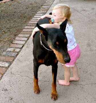 Un chien qui joue avec une fillette