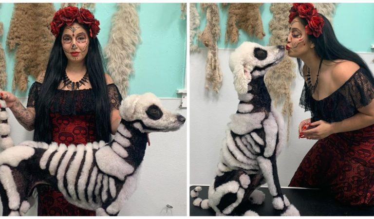 Halloween : elle tond son caniche pour le transformer en squelette, les internautes s'indignent