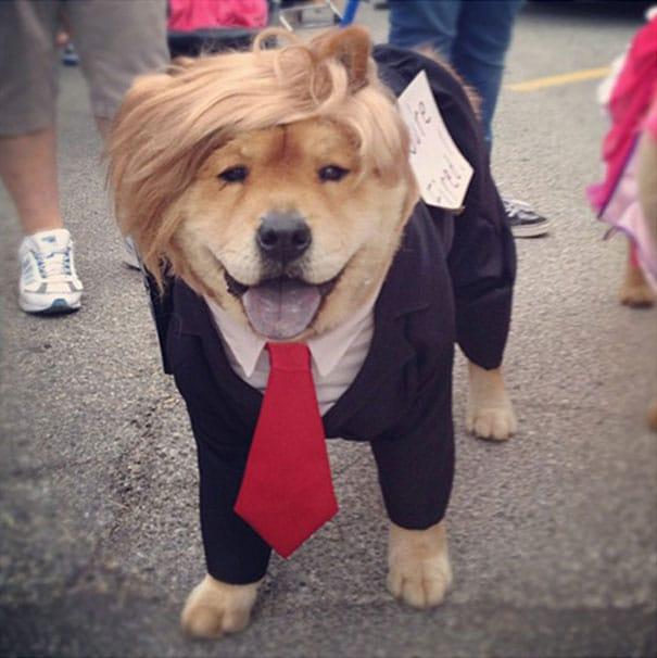 Un chien déguisé en homme d'affaires