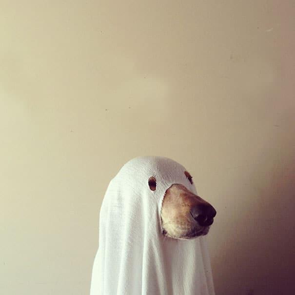 Un chien déguisé en fantôme