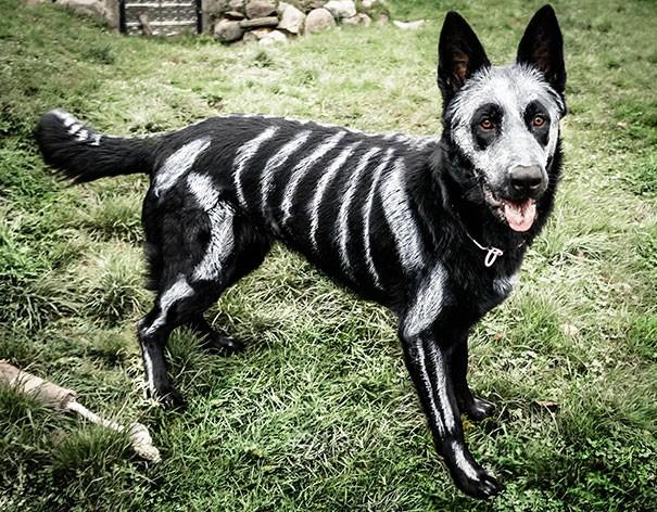 Un chien déguisé en squelette