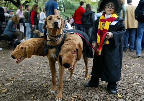 un déguisement de chien à trois tête dans Harry Potter