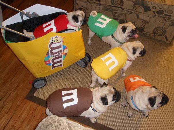 Des chiens déguisés en M&M's
