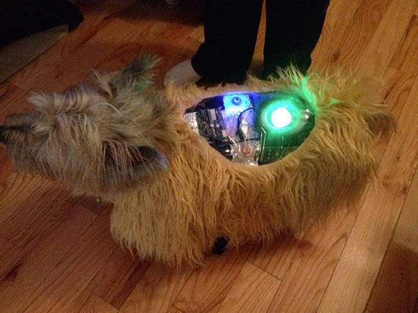 Un chien déguisé en robot