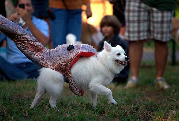 Un déguisement original pour chien