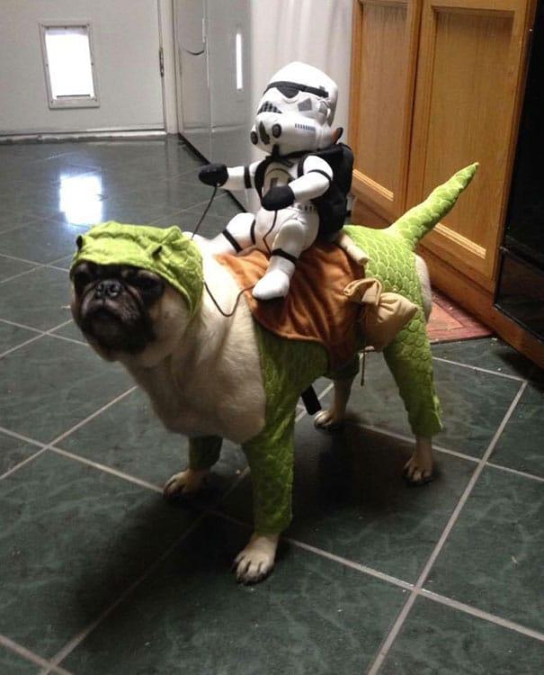 Un déguisement star wars pour chien