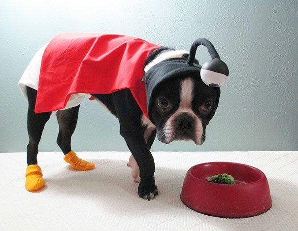 Un déguisement de chien pour Halloween