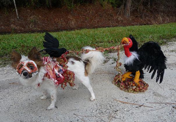 Un chien déguisé en viande mangée par des oiseaux
