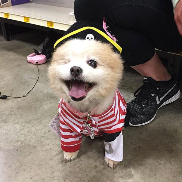 Un chien déguisé en pirate