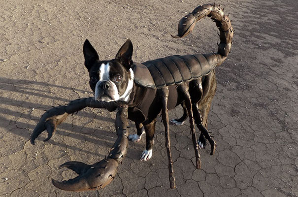 Un chien déguisé en scorpion