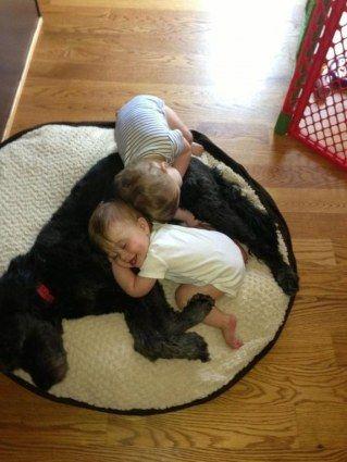 Des enfants font la sieste avec les chiens de la famille