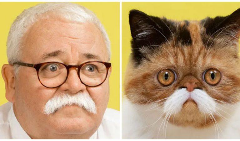 17 photographies de chats qui sont les véritables sosies de leur maître