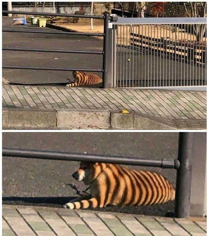 photos animaux illusion d'optique donnent peur bleue maître