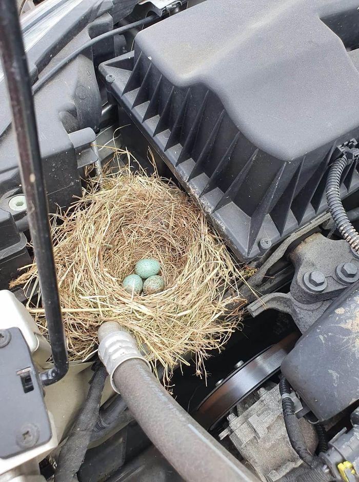 Un nid dans un moteur
