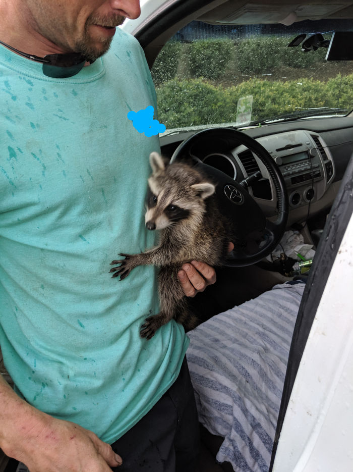 Un raton laveur dans un moteur