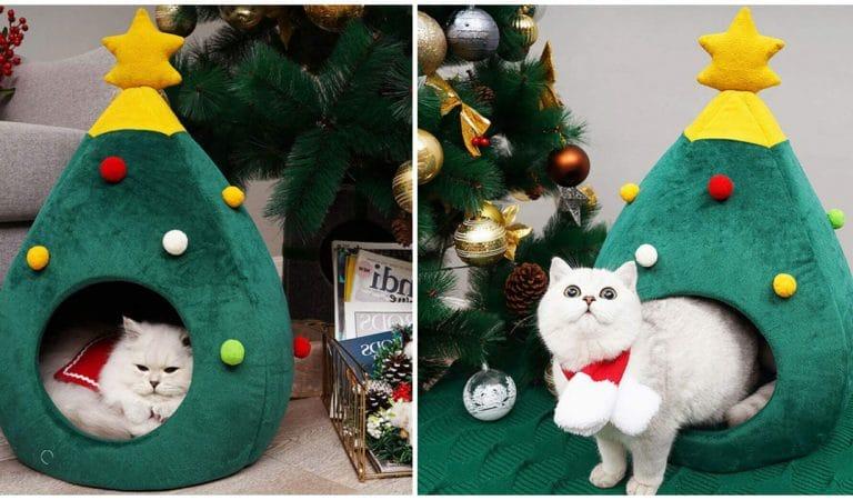 Noël : 10 idées cadeaux pour votre chat à moins de 20 euros