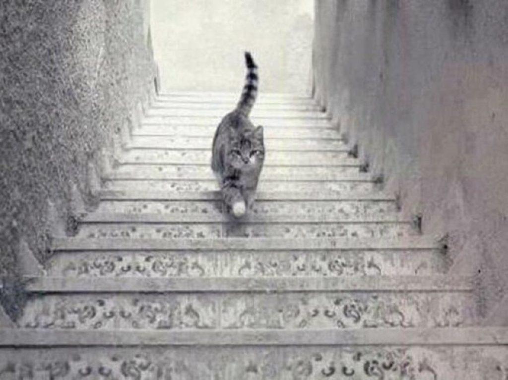 illusion d'optique chat escalier