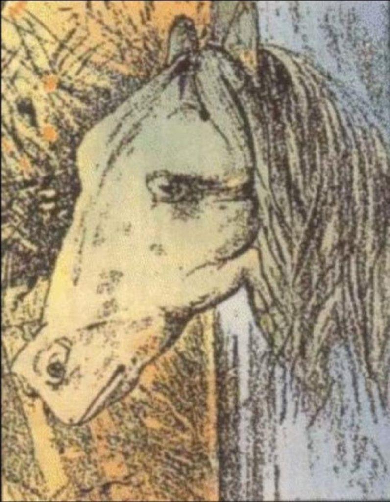 illusion d'optique cheval