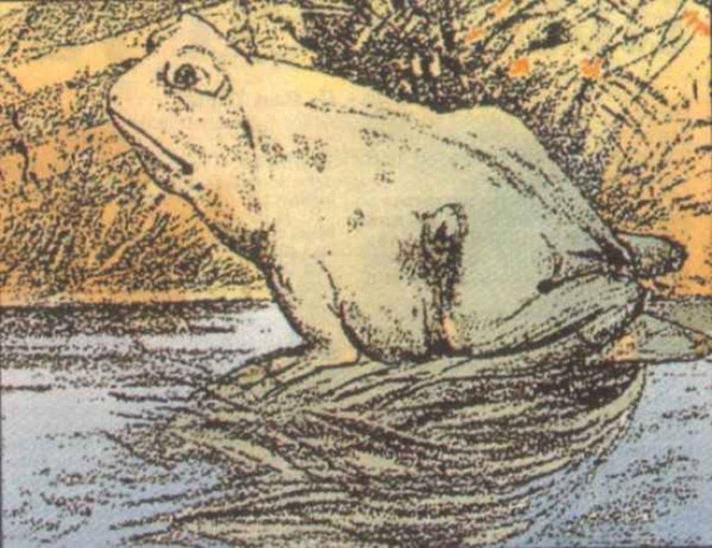 illusion d'optique grenouille