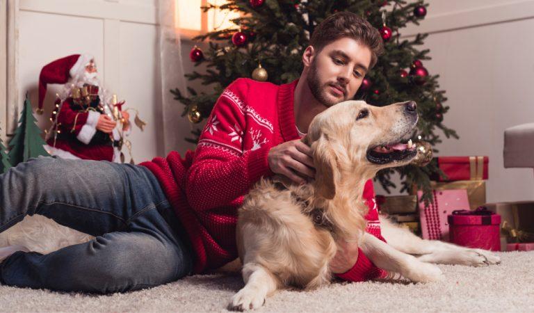 10 idées cadeaux parfaites à offrir à un chien à Noël !