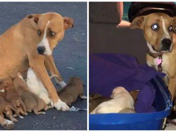 Une chienne abandonnée avec ses chiots au Texas