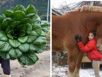 animaux végétaux objets géants insolites