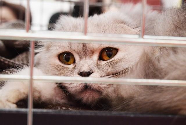 Un chat dans un refuge