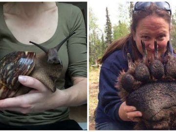 Des comparaisons étonnantes qui montrent la taille des animaux