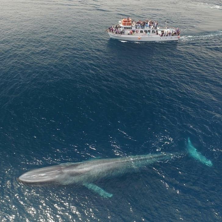 baleine immense