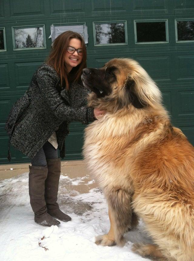 chien géant