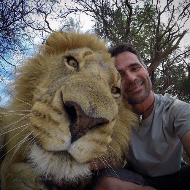 tête de lion immense