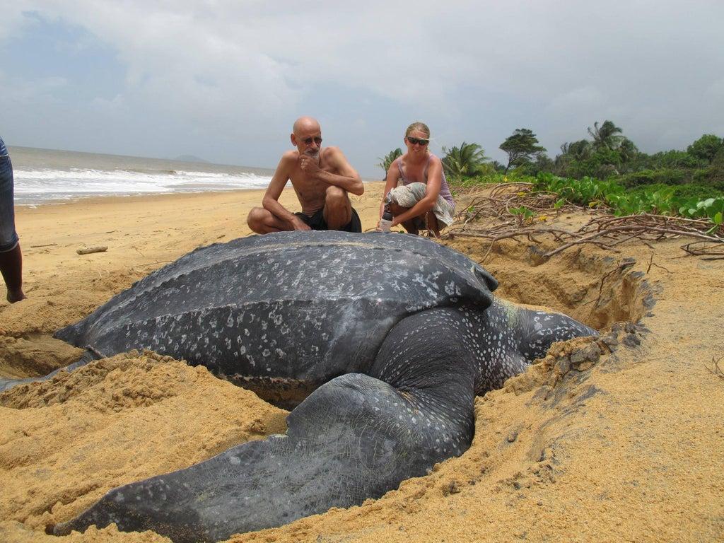 tortue de mer géante