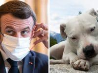 Emmanuel Macron et un dogue argentin