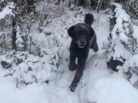 Illusion d'optique de Nick Thompson sur Twitter : un chien dans la neige.