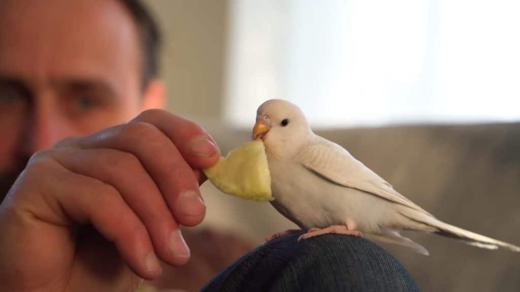Albin Wilsse donne à manger à son perroquet
